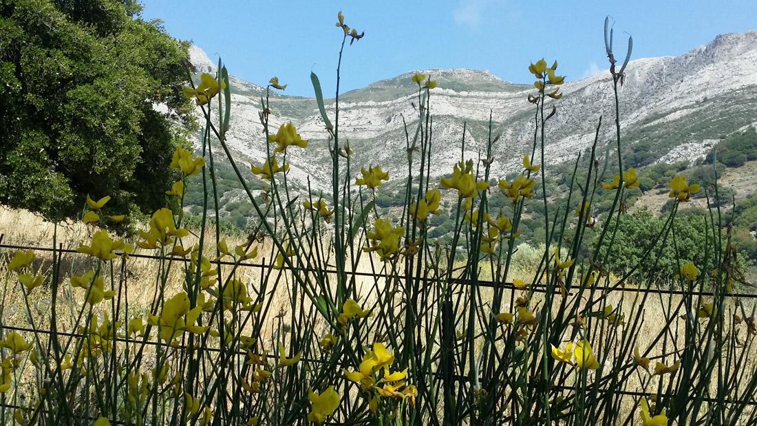 ELaiolithos - Moni - Kaloxilos - Chalkio - Agios Georgios Diasoritis - Monitsia - Panagia Rachidiotissa - Panagia Drosiani - ELaiolithos